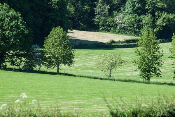 Heuvelland natuur