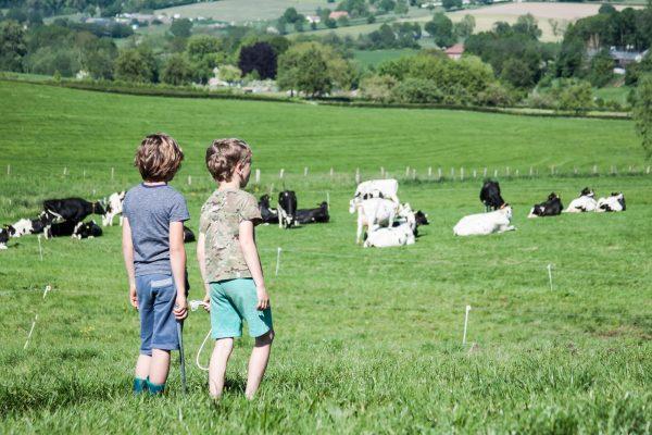 op de boerderijcamping
