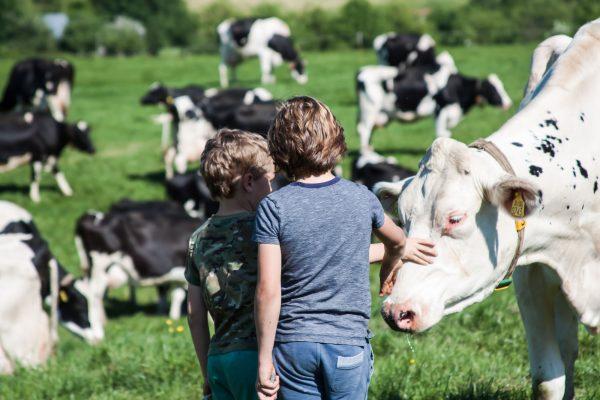 kids op de boerderijcamping
