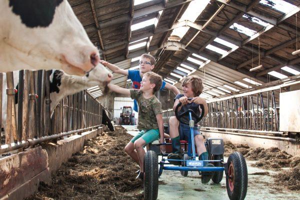 kinderen spelen boerderijcamping